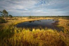 Lago bog no dia ensolarado fotografia de stock royalty free