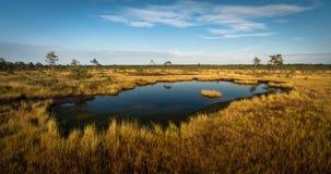 Lago bog no dia ensolarado imagens de stock royalty free