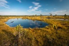 Lago bog no dia ensolarado fotos de stock