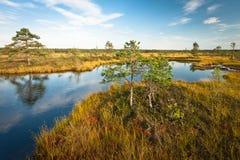 Lago bog no dia ensolarado imagens de stock