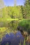 Lago bog - parque nacional Sumava imagem de stock royalty free
