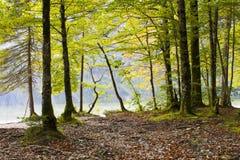 Lago Bohinj, Eslovênia Fotografia de Stock Royalty Free
