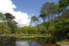 Lago bonito fotos de stock