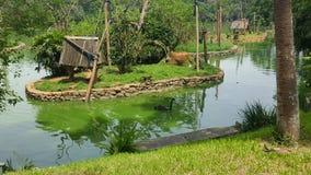 Lago bonito com macacos Imagens de Stock