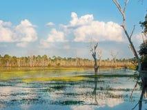 Lago bonito da seiva de Tonle, Camboja imagens de stock royalty free