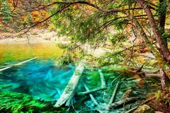 Lago bonito dos azuis celestes com os troncos de árvore submersos entre madeiras da queda Foto de Stock