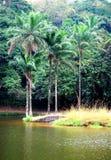 Lago bonito em África Fotos de Stock