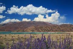 Lago bonito nas montanhas e nas flores violetas bonitos foto de stock royalty free