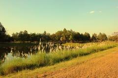 Lago bonito no campo Imagens de Stock