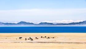 Lago bonito Sailimu em Xinjiang, China Fotos de Stock Royalty Free