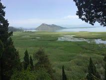 Lago bonito Skadar em Montenegro imagem de stock