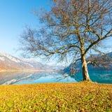 Lago Brienz nel Bernese Oberland switzerland Immagini Stock Libere da Diritti