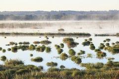 Lago brumoso morning Imagen de archivo
