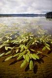 Lago Brunner Imágenes de archivo libres de regalías
