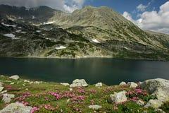 Lago Bucura en junio Fotos de archivo