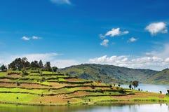 Lago Bunyonyi nell'Uganda Immagine Stock Libera da Diritti