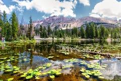 Lago butterfly di pesca Immagine Stock