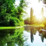 Lago no parque do verão Fotografia de Stock Royalty Free