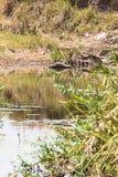 Lago cênico no Masai Mara, Kenya imagens de stock royalty free