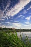 Lago cênico no parque do verão Fotografia de Stock