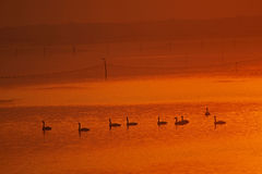 Lago caldo Fotografia Stock