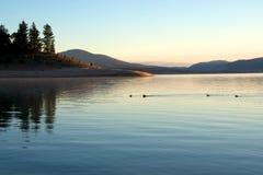 Lago calmo com patos Fotos de Stock Royalty Free