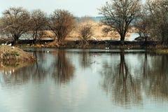 Lago calmo con i gabbiani Fotografia Stock
