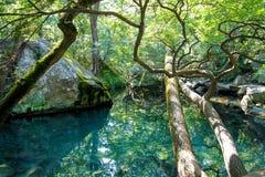 Lago calmo favoloso nella riflessione di legni Fotografie Stock