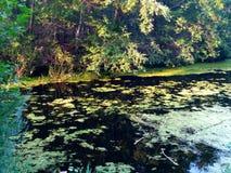 Lago calmo quieto da floresta Imagens de Stock