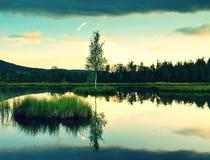 Lago cenagoso con el nivel del agua del espejo en el bosque misterioso, árbol joven en la isla en centro Color verde fresco de la Fotografía de archivo