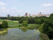 Lago Central Park, funzionamento turtle prima che ottenga radioattivo! fotografia stock libera da diritti