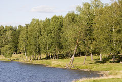 Lago cerca del bosque Foto de archivo