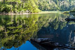 Lago Chico lake in National Park Huerquehue. Chile stock photography