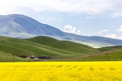 Lago china Qinghai nella violenza della fioritura fotografie stock libere da diritti