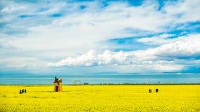 Lago china Qinghai nella violenza della fioritura fotografia stock