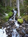 Lago claro na floresta imagens de stock