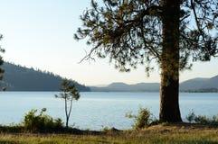 Lago Coeur d 'Alene com pinho de Ponderosa imagens de stock