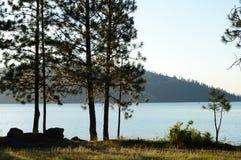 Lago Coeur d 'Alene com pinhos de Ponderosa fotografia de stock