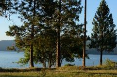Lago Coeur d 'Alene com pinhos de Ponderosa foto de stock royalty free