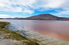 Lago Colorada, Altiplano, Bolívia Imagem de Stock