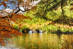 Lago com água claro entre a folha das árvores no outono imagem de stock royalty free