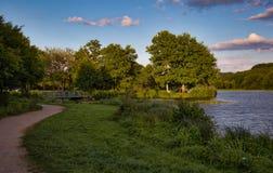 Lago com as árvores no por do sol Imagem de Stock