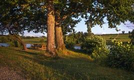 Lago com as árvores no por do sol Foto de Stock Royalty Free