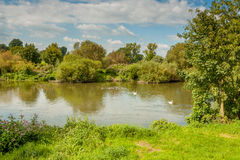 Lago com cisnes germany Imagens de Stock