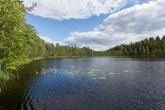 Lago com costa rochosa C?u azul No pinho Natureza de Finlandia fotografia de stock royalty free