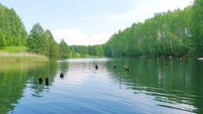 Lago com cotoes velhos na floresta Fotos de Stock