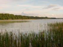 Lago com juncos Imagem de Stock