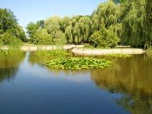 Lago com lírios de água foto de stock