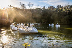 Lago com os barcos do pedal da cisne - Gramado black do negro de Lago, Rio Grande do Sul, Brasil fotos de stock