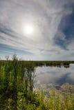 Lago com os juncos sob o sol Fotos de Stock
